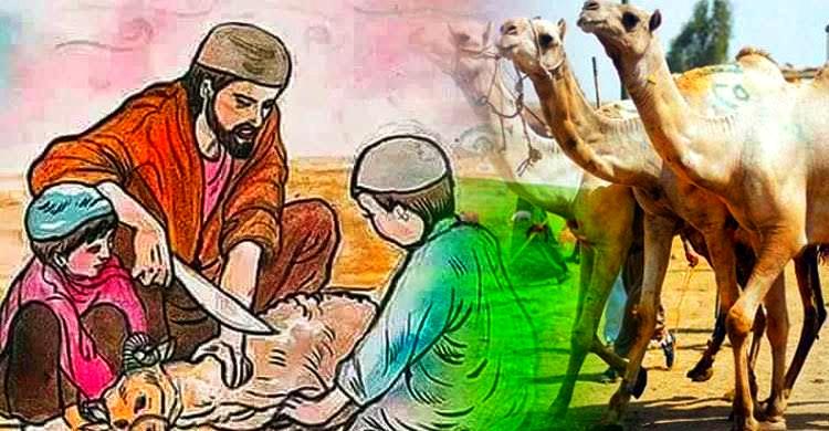 কুরবানীর নিয়ম কানুন এবং গুরুত্বপূর্ণ আলোচনা